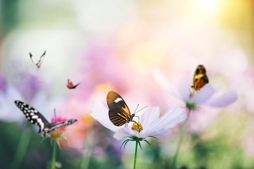 Summer garden with colorful butterflies.