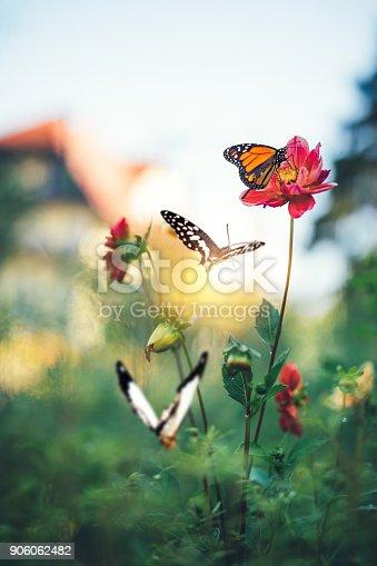 999676880 istock photo Butterfly Garden 906062482
