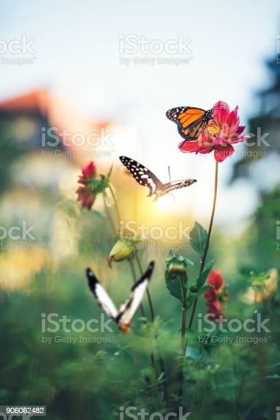 Butterfly garden picture id906062482?b=1&k=6&m=906062482&s=612x612&h=ohc5kdtnjxnad0quqs6gcltiax8xpb kju3uzqtcuug=