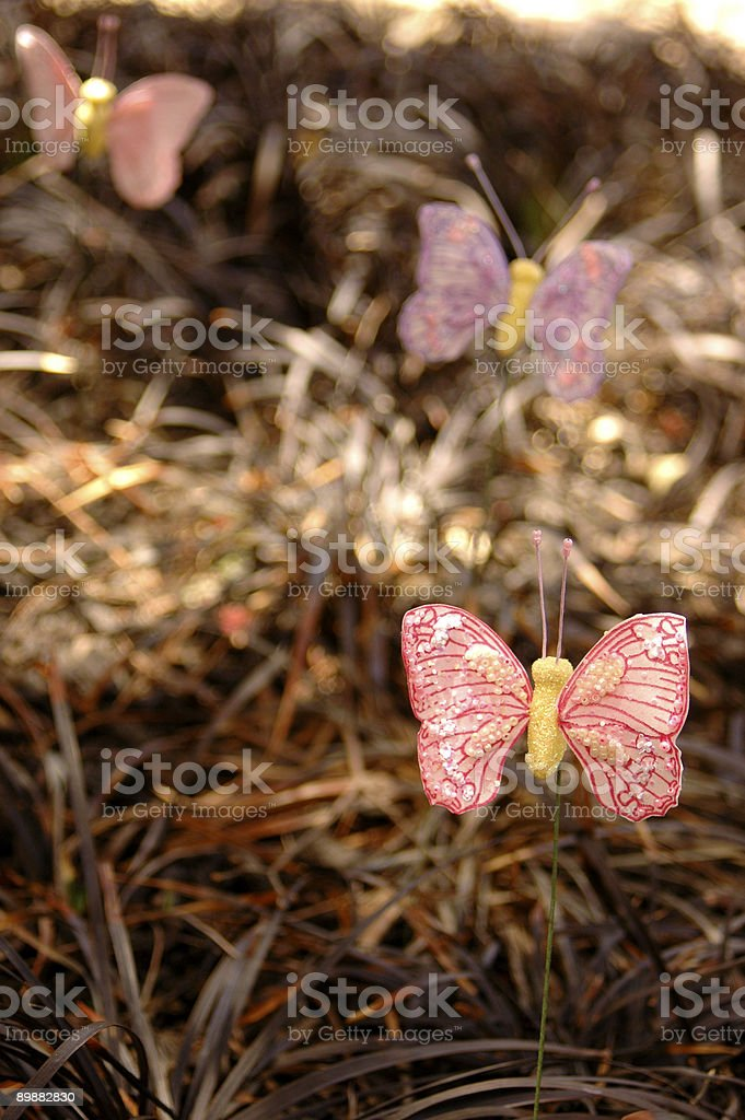 Butterfly Grass royalty-free stock photo