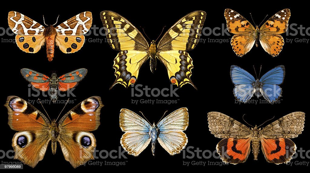 Butterfly group royalty free stockfoto