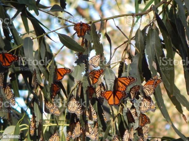 Butterfly haven picture id867988582?b=1&k=6&m=867988582&s=612x612&h=9qshjl s3cu1asb87rwxhe 6u82xewdwelxhyr8hd2y=