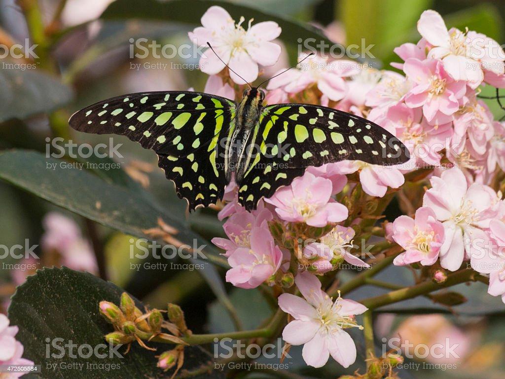 Butterfly in a garden stock photo