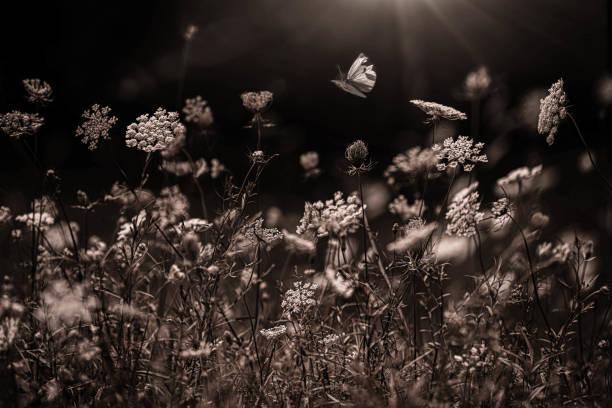 Butterfly in a Meadow stock photo