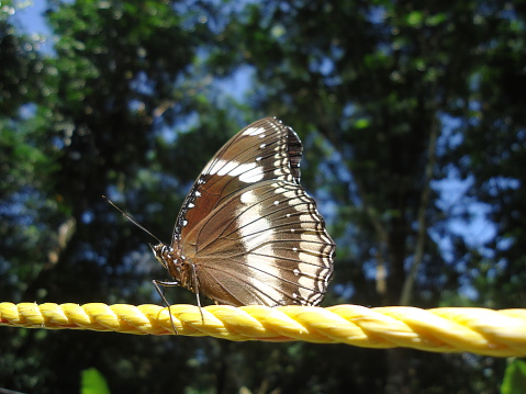 Nature is filled with variety's .a varity butterfly from Kerala God's own country