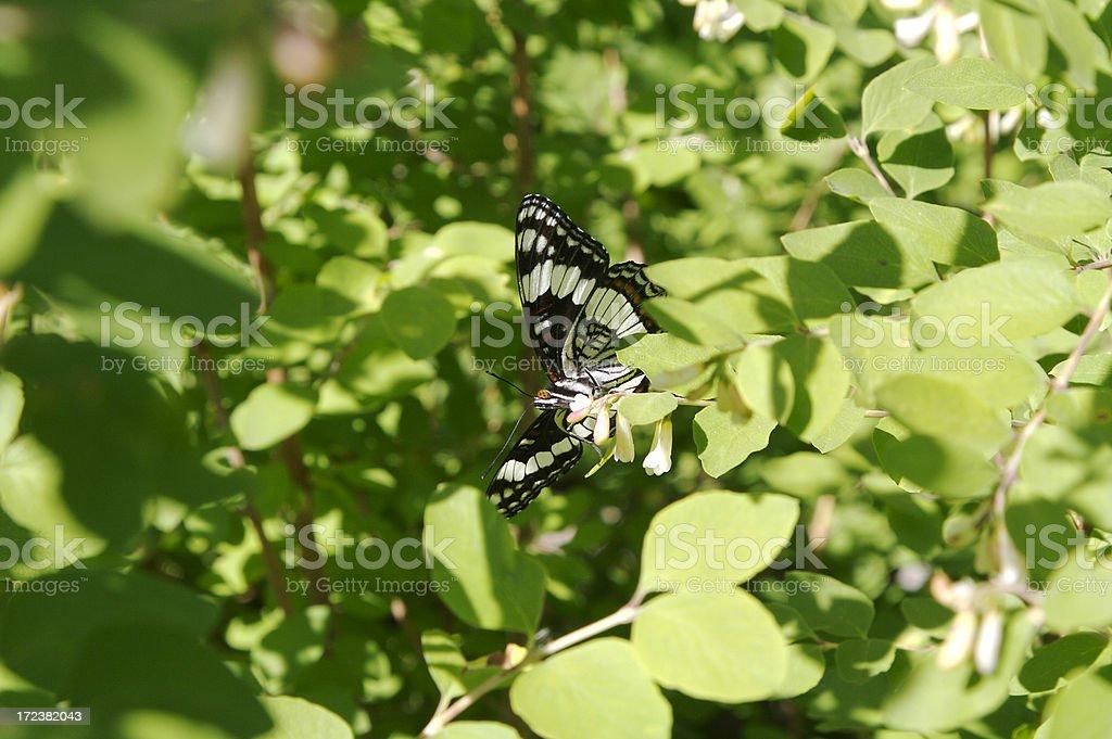 Schmetterling in einem Baum – Foto