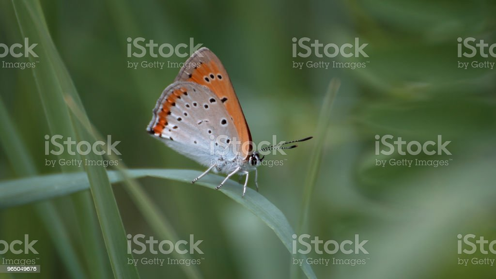 Butterfly in cloudy zbiór zdjęć royalty-free