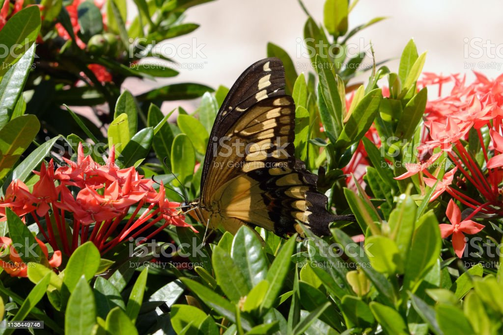 Butterfly in flowers and leaves stock photo