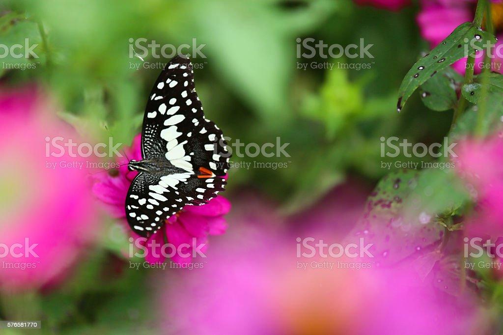 Butterfly in garden and flying to many flowers in garden - foto de acervo