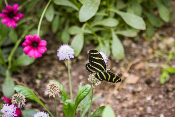 butterfly in garden stock photo