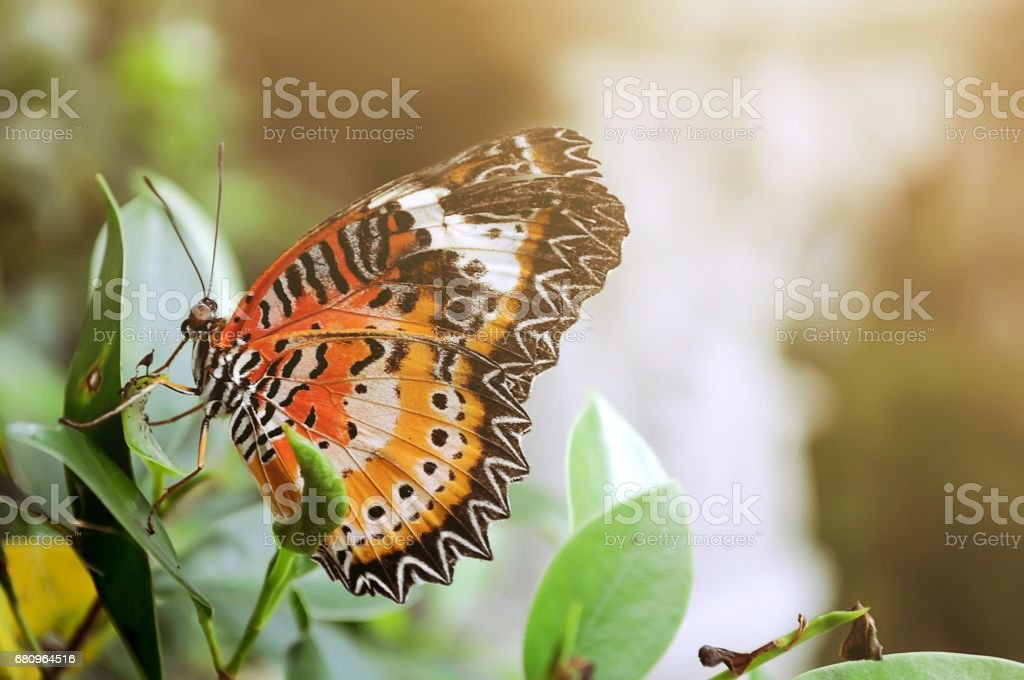 Butterfly in garden royalty-free stock photo