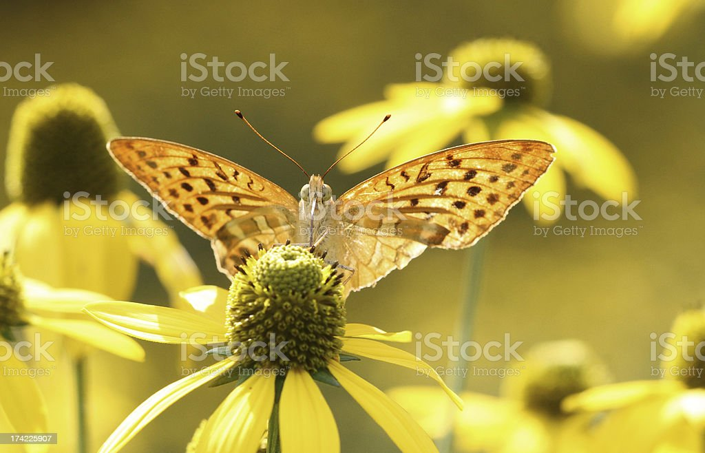 Butterfly in gold stock photo
