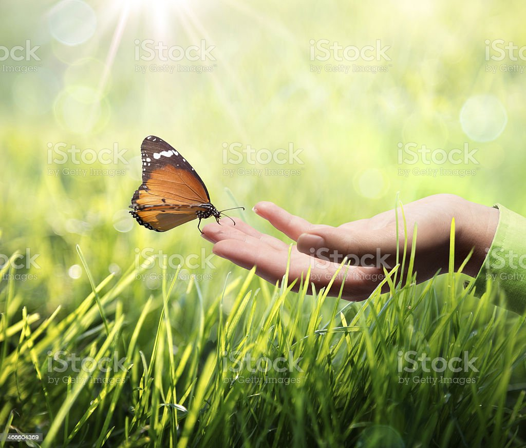 butterfly in hand on grass sustainability concept in green and sunshine Animals In The Wild Stock Photo