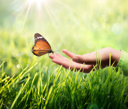 Butterfly In Hand On Grass Stock Photo - Download Image Now