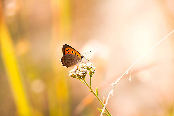 Butterfly in natural background picture id504858804?b=1&k=6&m=504858804&s=612x612&w=0&h=hrwmodbj735zvpxzo3grotv8ufh9pdy3l51ev jvhuq=