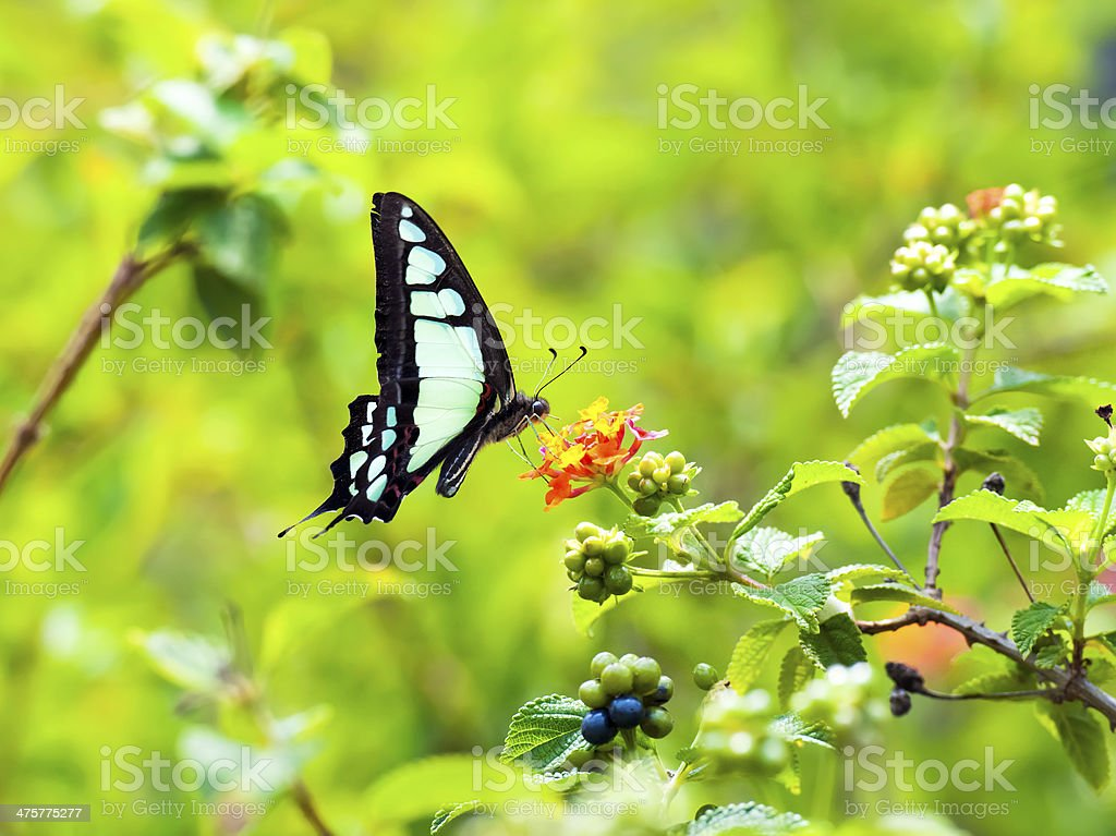 Butterfly in Summer stock photo