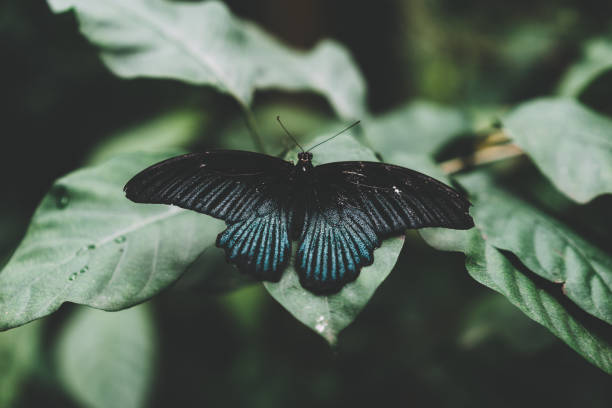 Butterfly in the garden picture id959081574?b=1&k=6&m=959081574&s=612x612&w=0&h=gepaau6zcqv0mxtzti9ldbl9lxzwf cqa j suornka=
