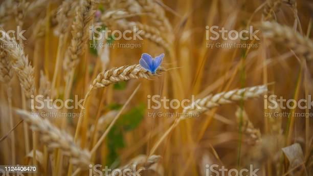 Butterfly in the grain picture id1124406470?b=1&k=6&m=1124406470&s=612x612&h=f fo mqczjpei bmpbzdmlibbgxeu594p0t6afthlm4=