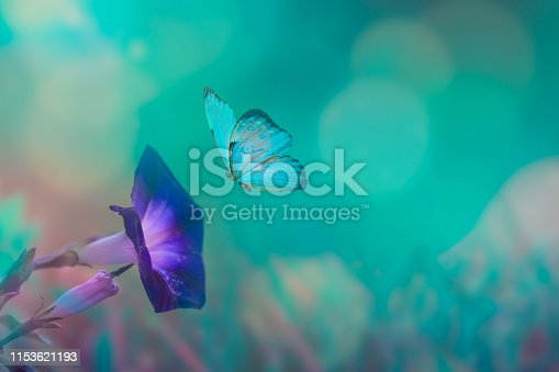 Butterfly in the grass on a meadow at night in the shining moonlight on nature in blue and purple tones, macro. Fabulous magical artistic image of a dream