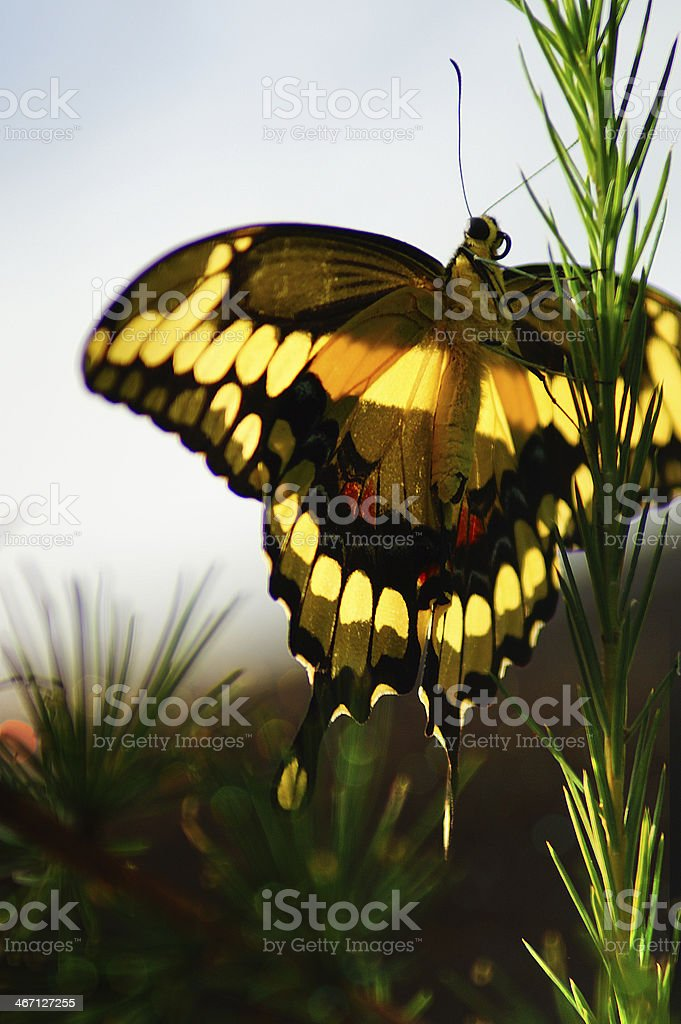 Butterfly in the meadow royalty-free stock photo