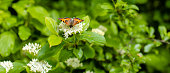 Beautiful Butterfly with an orange wings in the nature