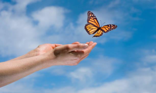 Butterfly in the sky picture id182404760?b=1&k=6&m=182404760&s=612x612&w=0&h=fq zltpsuomx3ejx3itxindhqgswhwmuy4o1axreayo=
