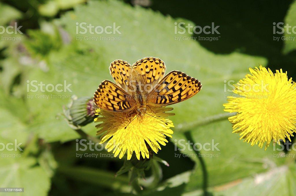Schmetterling in der Wildnis – Foto