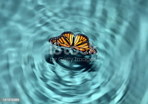 Butterfly in a pool of water