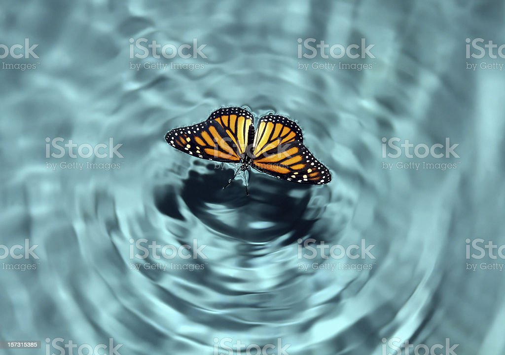 Butterfly in Water stock photo