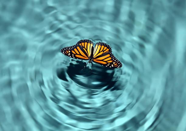 Mariposa en agua - foto de stock