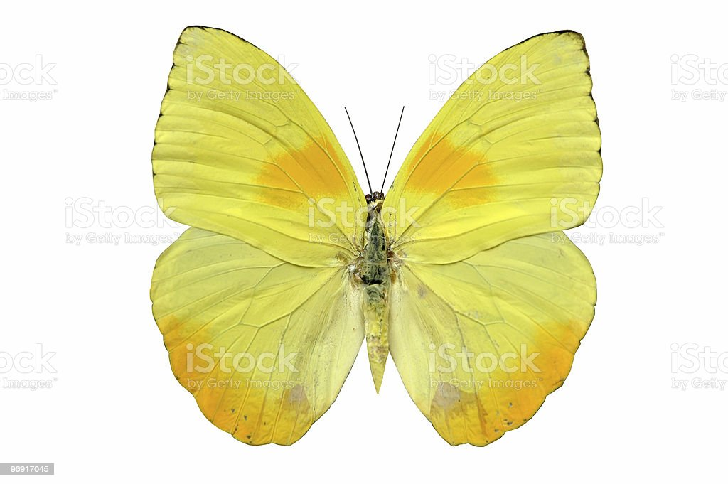 Butterfly in yellow tones royalty-free stock photo