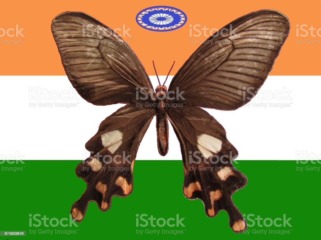 Butterfly India stock photo