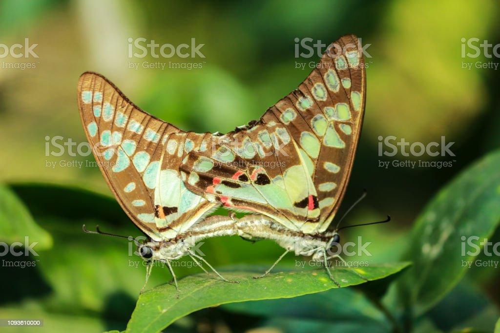 Schmetterlinge: Mehr als 10000 Angebote, Fotos, Preise