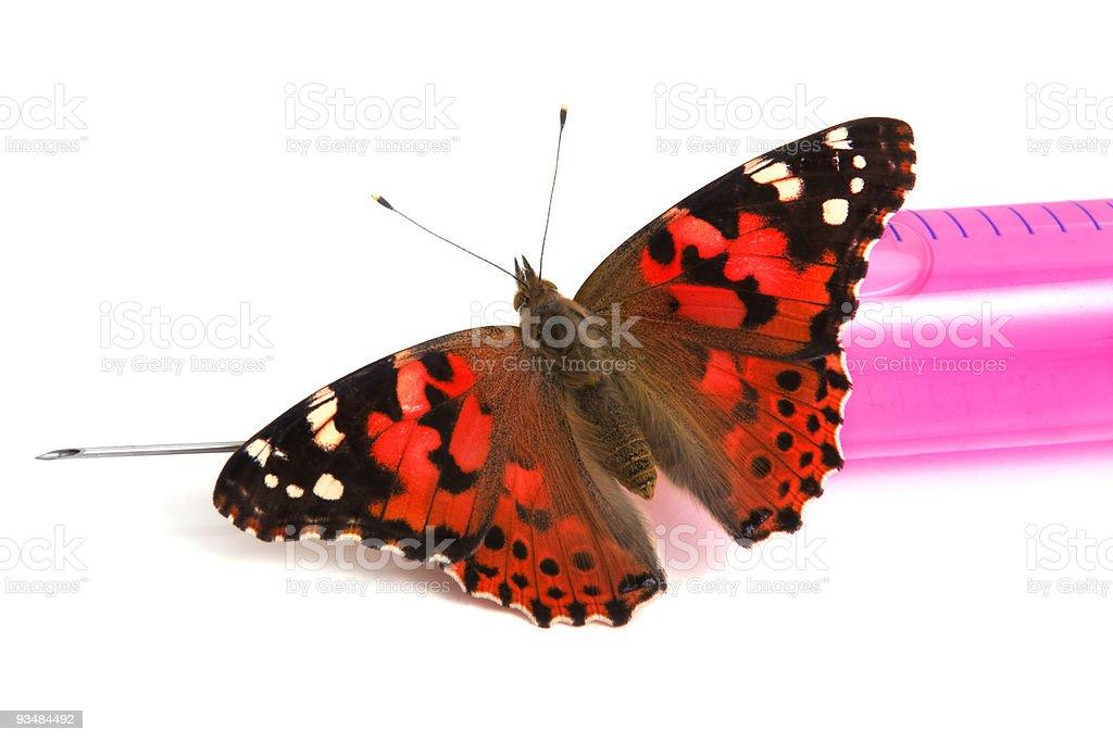 나비 는 앉아 주사기 - 로열티 프리 건강관리와 의술 스톡 사진
