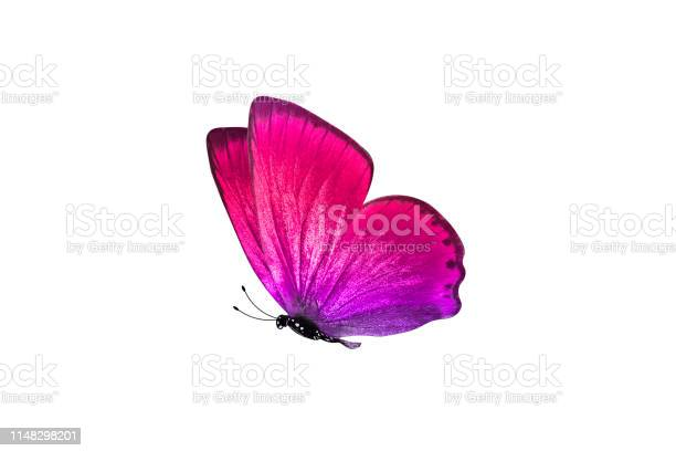 Butterfly isolated on white background colorful insect closeup picture id1148298201?b=1&k=6&m=1148298201&s=612x612&h=nmxpsy7g2ztw0jfxrta1ha7em72an0 3wl3awnsnphy=