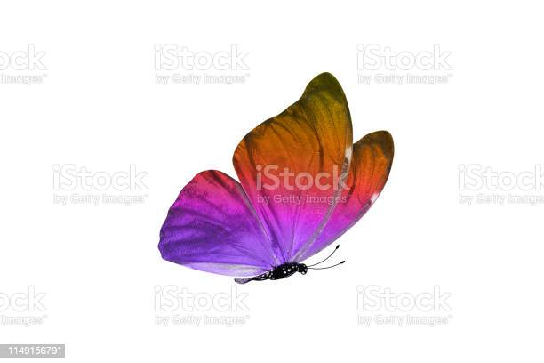 Butterfly isolated on white background colorful insect closeup picture id1149156791?b=1&k=6&m=1149156791&s=612x612&h=n2jr5i0kuupulpkuxq23k70mwhrdbtuicsx7myzhnus=