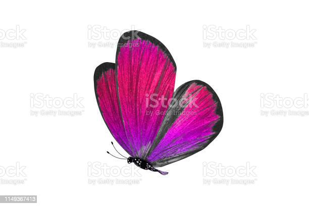Butterfly isolated on white background colorful insect closeup picture id1149367413?b=1&k=6&m=1149367413&s=612x612&h=kbf28ntfcqdjo8uq5z7btvbnxtvzm36eewmypbmpo7s=
