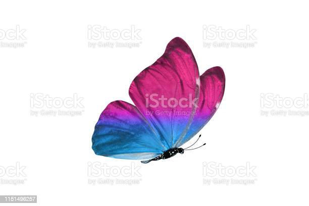 Butterfly isolated on white background colorful insect closeup picture id1151496257?b=1&k=6&m=1151496257&s=612x612&h=ogfi3zrkp9od2e1pp jt5qtumuhk6oj0jqf7pyf7xvk=