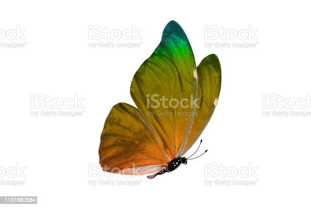 Butterfly isolated on white background colorful insect closeup picture id1151682584?b=1&k=6&m=1151682584&s=612x612&h=z5ixadkbwzexdin zfblv6sdnksl tc4nadx7yqwweu=