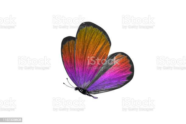 Butterfly isolated on white background colorful insect closeup picture id1152309808?b=1&k=6&m=1152309808&s=612x612&h=fnoynn1iqudspn0ltg5c6rklcjauvzb1tna4xytkkze=