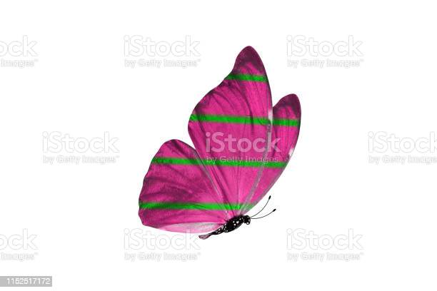 Butterfly isolated on white background colorful insect closeup picture id1152517172?b=1&k=6&m=1152517172&s=612x612&h=x4 ozycolgmbzb97gq amwr26yebx2lr mqribpiw7g=