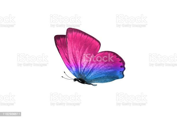Butterfly isolated on white background colorful insect closeup picture id1152936511?b=1&k=6&m=1152936511&s=612x612&h=7qfi0 q5htnaxzqnqr3bio3q95vy1bzmoit556nmv5c=