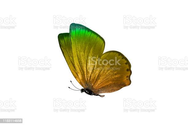 Butterfly isolated on white background colorful insect closeup picture id1153114658?b=1&k=6&m=1153114658&s=612x612&h=fumuwo41cey8dlrcjq419v0wqmblcigs2fao3yprou0=