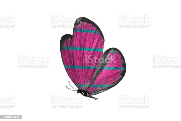 Butterfly isolated on white background colorful insect closeup picture id1155533041?b=1&k=6&m=1155533041&s=612x612&h=dnk2rrnx0lvhsmliiicly9fp3pcnhpnk 0z8hmtwmso=