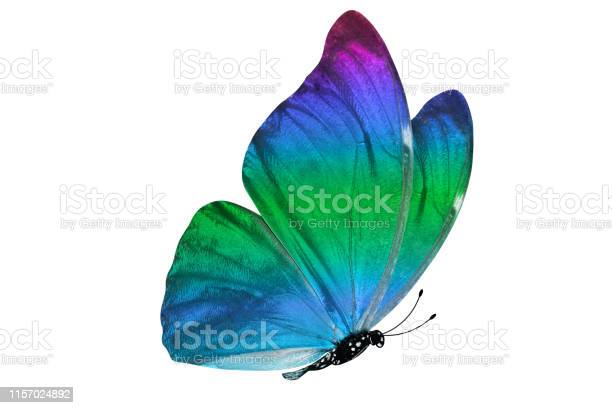 Butterfly isolated on white background colorful insect closeup picture id1157024892?b=1&k=6&m=1157024892&s=612x612&h=bcjkvcjh7zj6djacedvywdrzc jvnjth25kbmmldhni=