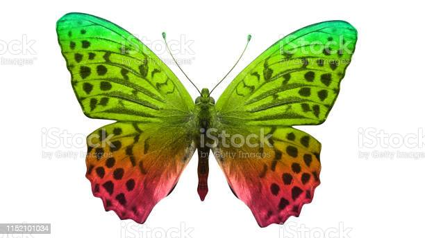 Butterfly isolated on white multicolor insect tropical animal for picture id1152101034?b=1&k=6&m=1152101034&s=612x612&h=g kxpovp b2ejr2qp23wwxpc76ony7p6b3y3fffolxi=