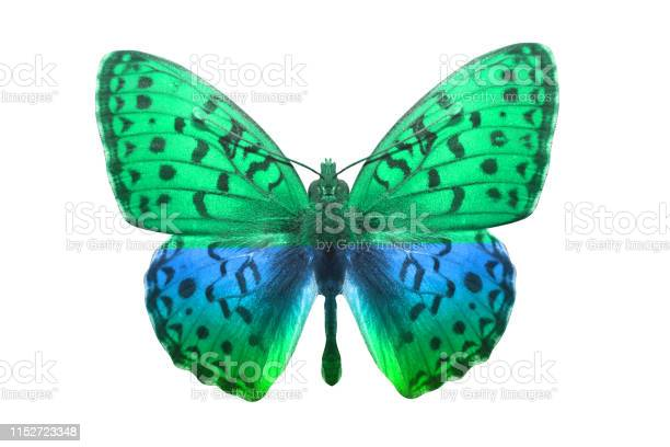 Butterfly isolated on white multicolor insect tropical animal for picture id1152723348?b=1&k=6&m=1152723348&s=612x612&h=4ysjbabmv af8kf31nn 6c9w9t3emreiug 56wlprf0=