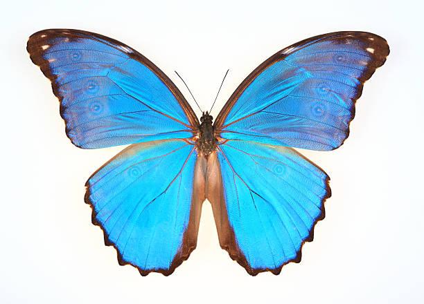 Butterfly isolated on white picture id175487981?b=1&k=6&m=175487981&s=612x612&w=0&h=imsi1kueraesabsexbfaqjepqvtkuufh9bdaxc9fw3s=