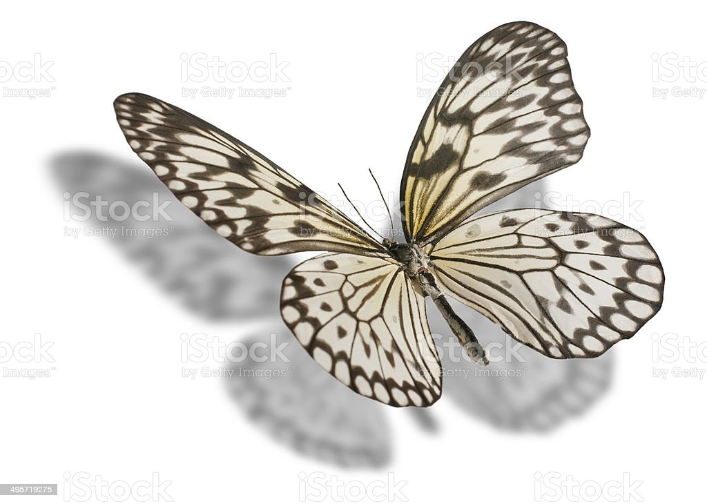 Butterfly isolated on white. stock photo