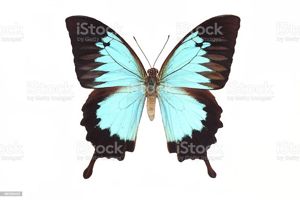 Farfalla isolato su bianco foto stock royalty-free